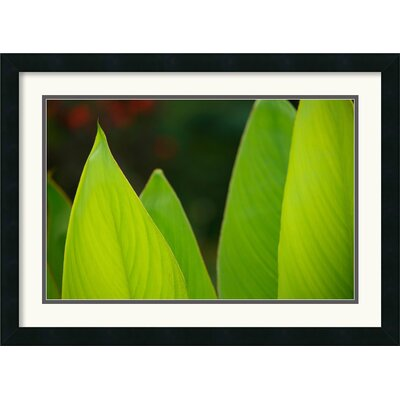 'Vibrant Green Leaves' by Andy Magee Framed Photographic Print DSW352617