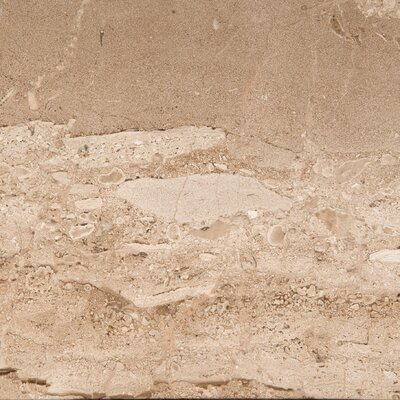 Marble 12 x 12 Field Tile in Daino Reale