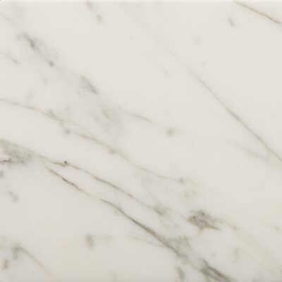 Marble 24 x 24 Field Tile in Bianco Gioia