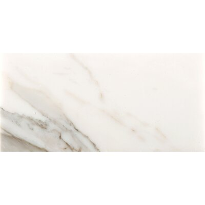 Marble 12 x 24 Field Tile in Calacata Oro
