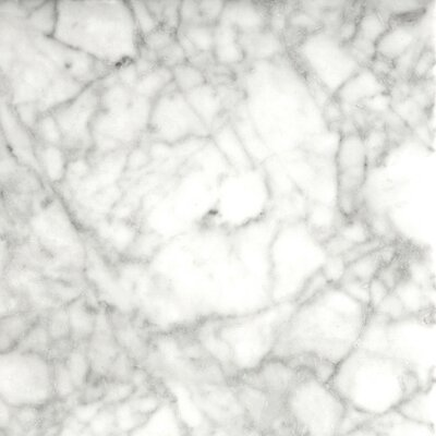 Marble 12 x 12 Field Tile in Bianco Gioia Honed