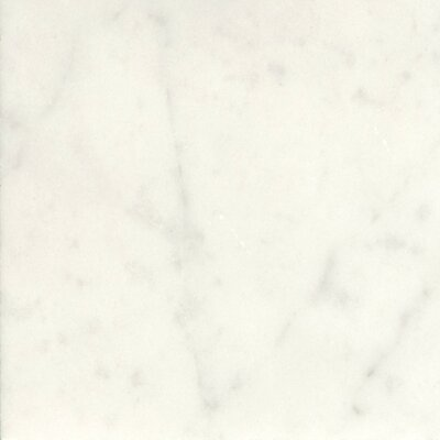 Marble 18 x 18 Field Tile in Bianco Gioia