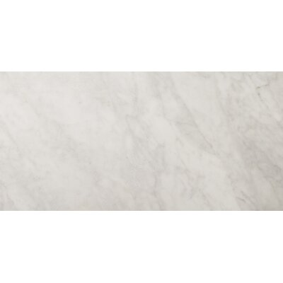 "Natural Stone 12"" x 24"" Polished Marble Field Tile in Bianco Gioia"