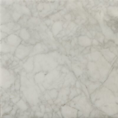 "Natural Stone 12"" x 12"" Honed Marble Field Tile in Bianco Gioia"