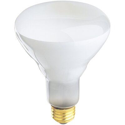 120-Volt Halogen Light Bulb (Set of 2)