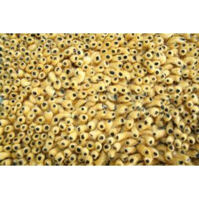 Eyeball Hand-Woven Gold Area Rug Rug Size: Rectangle 8 x 10