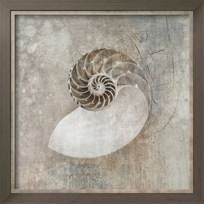 'Nautilus I' by Elena Ray Framed Painting Print CST41479 28602165