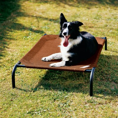 Elevated Indoor/Outdoor Pet Cot Size: Large (51 H x 32 W), Color: Terra Cotta