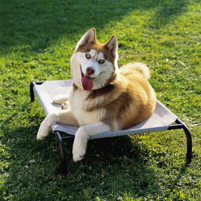 Elevated Indoor/Outdoor Pet Cot Size: Medium (42 H x 26 W), Color: Gray