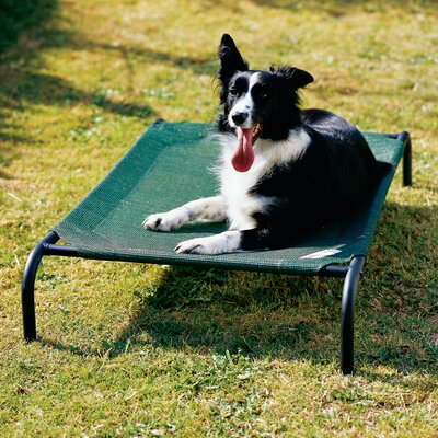 Elevated Indoor/Outdoor Pet Cot Size: Large (51 H x 32 W), Color: Brunswick Green