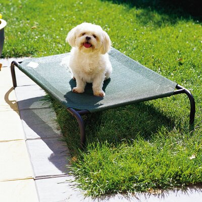 Elevated Indoor/Outdoor Pet Cot for Small Breeds Color: Brunswick Green