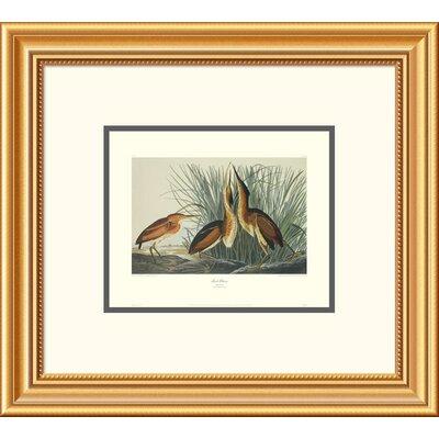 Least Bittern by John James Audubon Framed Painting Print Size: 34
