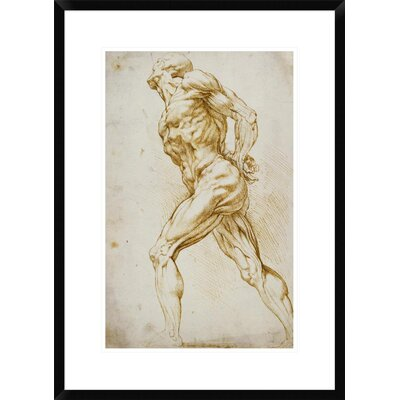 Anatomical Study: Nude Male by Peter Paul Reubens Framed Painting Print DPF-265454-22-266