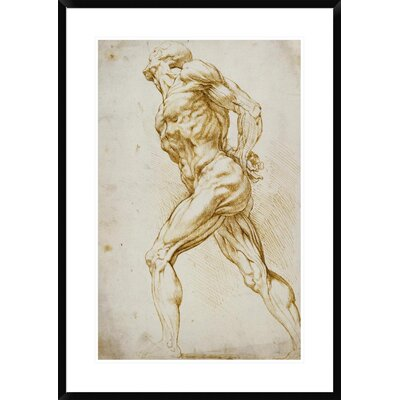 Anatomical Study: Nude Male by Peter Paul Reubens Framed Painting Print DPF-265454-30-266