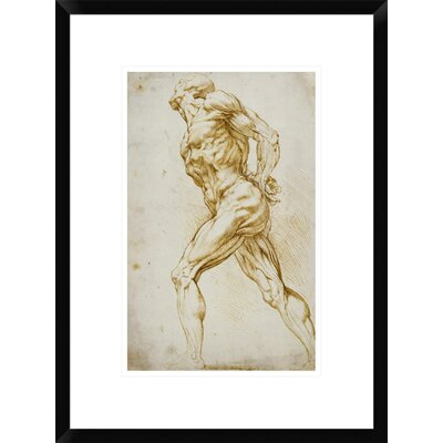 Anatomical Study: Nude Male by Peter Paul Reubens Framed Painting Print DPF-265454-16-266