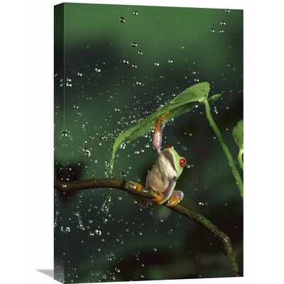 Nature Photographs Red-Eyed Tree Frog GCS-395717-1624-142