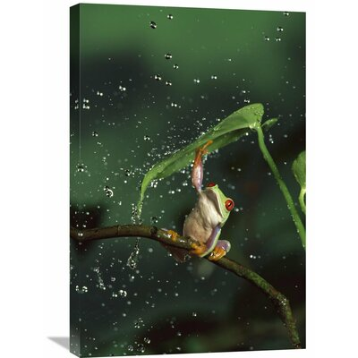 Nature Photographs Red-Eyed Tree Frog GCS-395717-2030-142