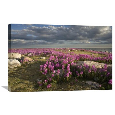 Nature Photographs Fireweed Covered Island, Hudson Bay, Canada by Matthias Breiter Photographic Print on Canvas Size: 20
