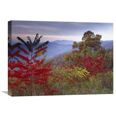 Nature Photographs Staghorn Sumac in Autumn Blue Ridge Mountain Range Virginia by Tim Fitzharris Photographic Print on Wrapped Canvas GCS-396583-1824-142