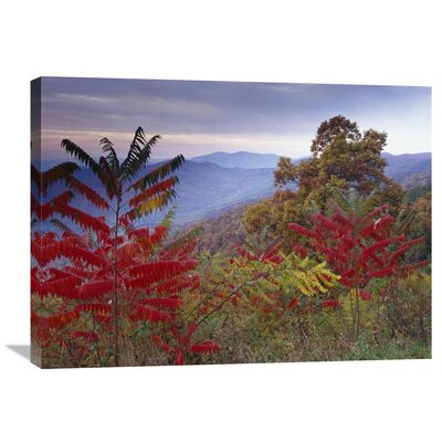 Nature Photographs Staghorn Sumac in Autumn Blue Ridge Mountain Range Virginia by Tim Fitzharris Photographic Print on Wrapped Canvas GCS-396583-2432-142