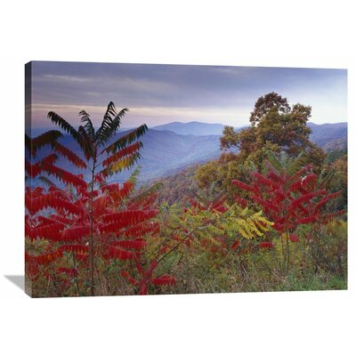 Nature Photographs Staghorn Sumac in Autumn Blue Ridge Mountain Range Virginia by Tim Fitzharris Photographic Print on Wrapped Canvas GCS-396583-3040-142