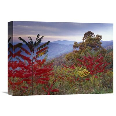 Nature Photographs Staghorn Sumac in Autumn Blue Ridge Mountain Range Virginia by Tim Fitzharris Photographic Print on Wrapped Canvas GCS-396583-1216-142