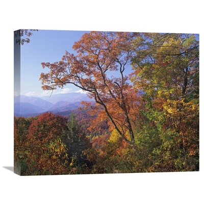 Nature Photographs Deciduous Forest in Autumn, Blue Ridge Parkway, Great Smoky Mountains, North Carolina Photographic Print on Wrapped Canvas GCS-397061-2024-142