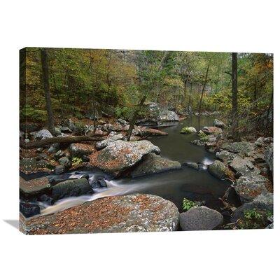 Nature Photographs Cedar Creek Flowing Through Deciduous Forest, Petit Jean State Park, Arkansas Photographic Print on Canvas Size: 24