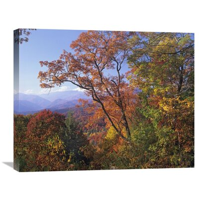 Nature Photographs Deciduous Forest in Autumn, Blue Ridge Parkway, Great Smoky Mountains, North Carolina Photographic Print on Wrapped Canvas GCS-397061-2228-142
