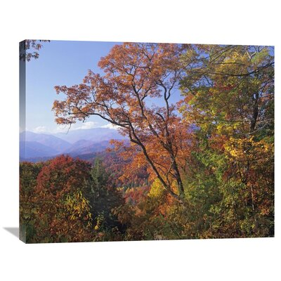 Nature Photographs Deciduous Forest in Autumn, Blue Ridge Parkway, Great Smoky Mountains, North Carolina Photographic Print on Wrapped Canvas GCS-397061-2835-142