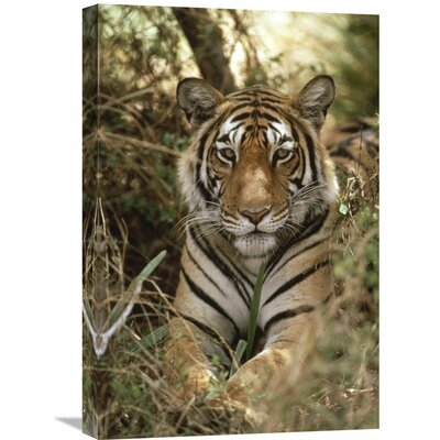 Nature Photographs Bengal Tiger Portrait, Ranthambore National Park, India Photographic Print on Canvas Photographic Print on Canvas Size: 24