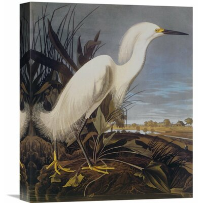 'Snowy Heron Or White Egret' by John James Audubon Painting Print on Wrapped Canvas Size: 36