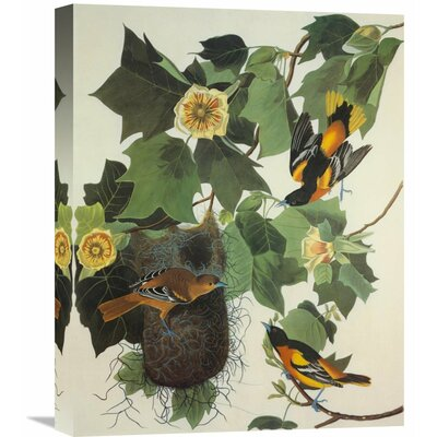'Baltimore Oriole' by John James Audubon Painting Print on Wrapped Canvas Size: 35