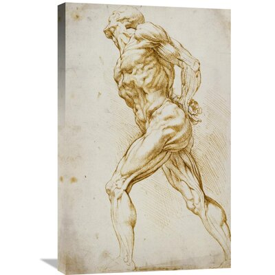 'Anatomical Study: Nude Male' by Peter Paul Reubens Graphic Art on Wrapped Canvas GCS-265454-30-142