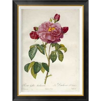 'Les Duchess D'Orleans Rose' by Pierre Joseph Redoute Framed Graphic Art Size: 36