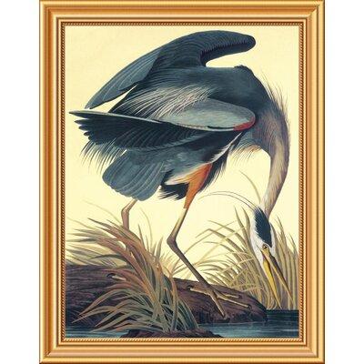 'Great Blue Heron' by John James Audubon Framed Graphic Art Size: 28