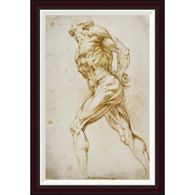 Anatomical Study: Nude Male by Peter Paul Reubens Framed Painting Print GCF-265454-30-288