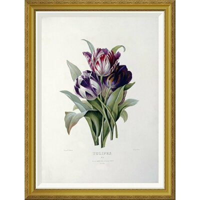 'Tulips' by Pierre Joseph Redoute Framed Graphic Art Size: 36