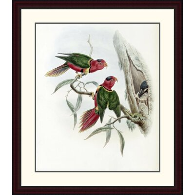 'Duchess of Connaught's Parakeet' by John Gould Framed Painting Print Size: 38