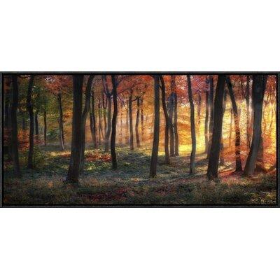 'Autumn Woodland Sunrise' by Photokes Framed Photographic Print GCF-466948-30-175