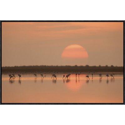 'Flamingos at Sunrise' by Joan Gil Raga Framed Photographic Print GCF-466383-1218-175