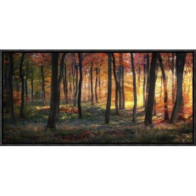 'Autumn Woodland Sunrise' by Photokes Framed Photographic Print GCF-466948-22-175