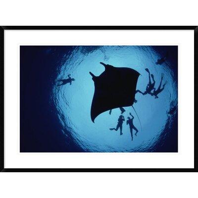 'Manta Ray, Flower Garden Banks Nms, Louisiana, Gulf of Mexico' Framed Photographic Print DPF-450950-2030-266 Wall Art