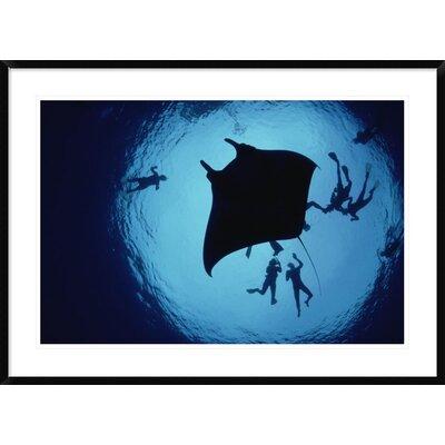 'Manta Ray, Flower Garden Banks Nms, Louisiana, Gulf of Mexico' Framed Photographic Print DPF-450950-2436-266 Wall Art