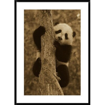 'Giant Panda Cub' Framed Photographic Print DPF-453666-2436-266
