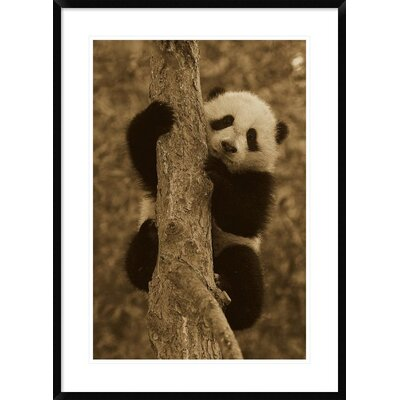 'Giant Panda Cub' Framed Photographic Print DPF-453666-2030-266