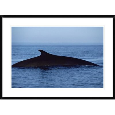 'Fin Whale Silhouetted Dorsal Fin, Baja California, Mexico' Framed Photographic Print DPF-450570-2030-266 Wall Art