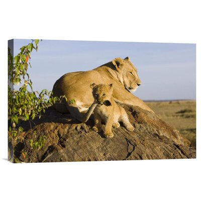 'African Lion Cub Playing With Its Mother'S Tail' Photographic Print on Canvas URBH7417 38403255