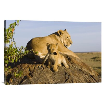'African Lion Cub Playing With Its Mother'S Tail' Photographic Print on Canvas URBH7417 38403257