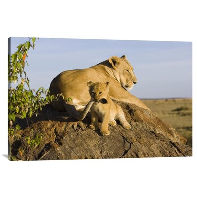 'African Lion Cub Playing With Its Mother'S Tail' Photographic Print on Canvas URBH7417 38403258
